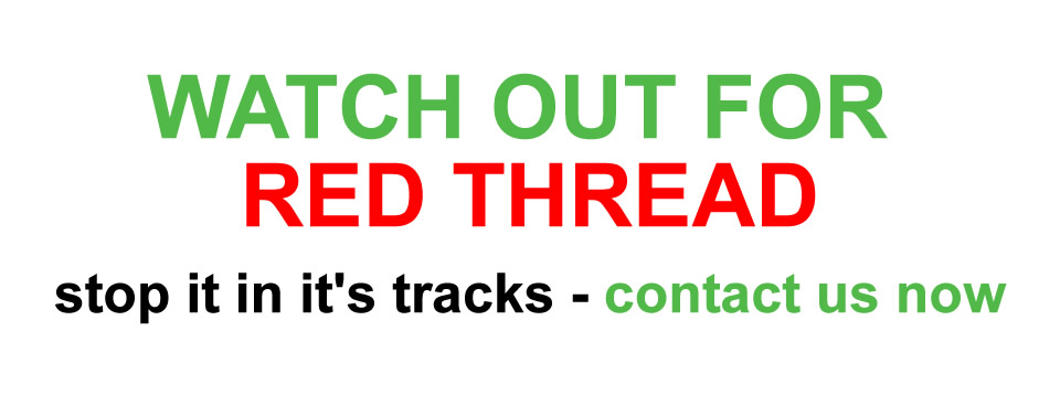 Watch out for Red Thread and Other Fungal Diseases
